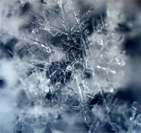 Cristalli di un fiocco di neve si sciolgono sotto il microscopio